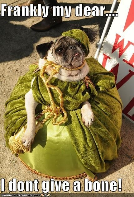 costume,dont-care,dress,fancy,frankly my dear,gone with the wind,halloween,howl-o-ween,pug,scarlett ohara