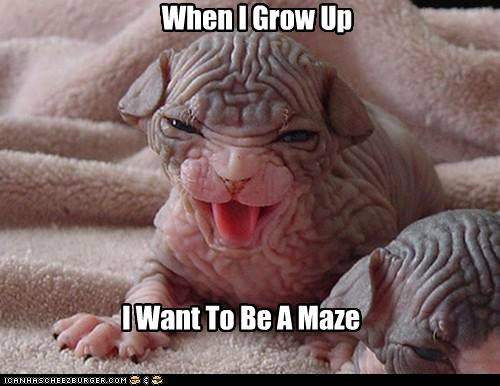 When I Grow Up I Want To Be A Maze