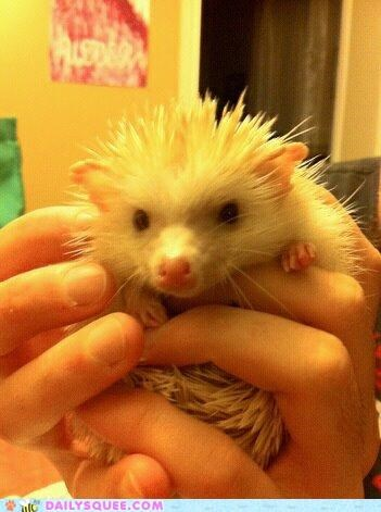 after,baby,bath,clean,first,Hall of Fame,happy,hedgehog,reader squees,relaxed