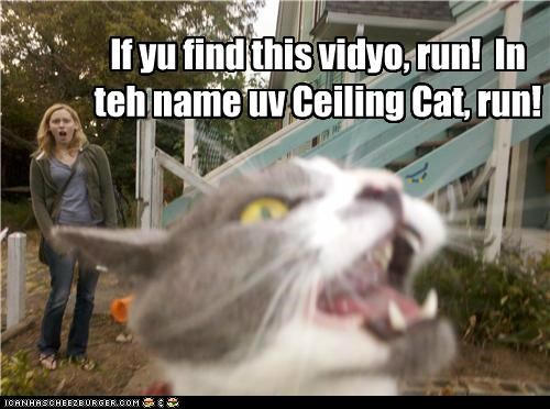 advice caption captioned cat ceiling cat conditional find recording run Video warning