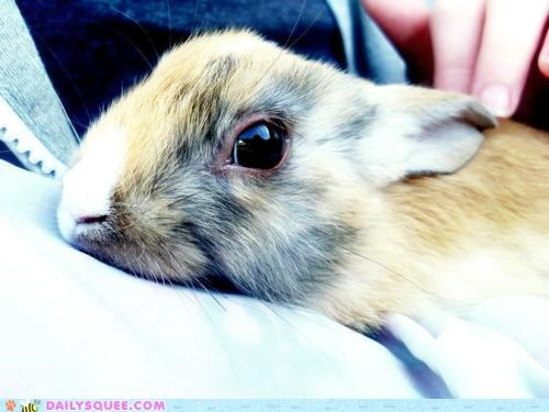 adorable bunny captivating eye eyes gaze happy bunday lost rabbit request stare Staring - 5312142592