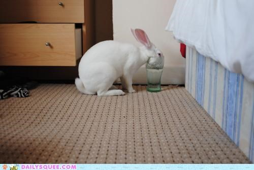 bunny,celebration,drink,drinking,glass,happy bunday,order,rabbit,toast,toasting,water