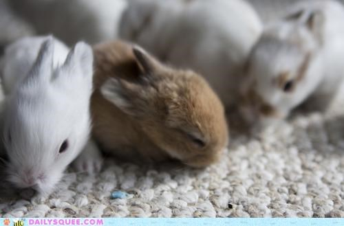 adorable Babies baby brigade bunnies bunny collective group Hall of Fame rabbit rabbits slogan tiny - 5312185856