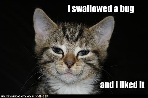 and,best of the week,bug,caption,captioned,cat,do want,Hall of Fame,I,kitten,liked,lolwut,smug,swallowed