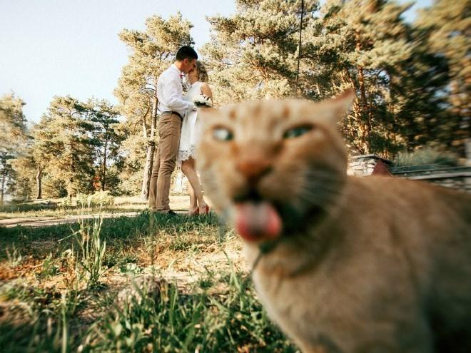 mejores Photobombs de bodas