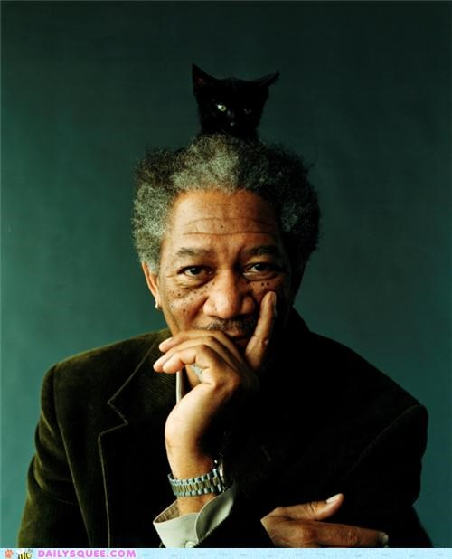 acting like animals adorable baby cat documentary fake Hall of Fame happy head kitten Morgan Freeman omg sitting
