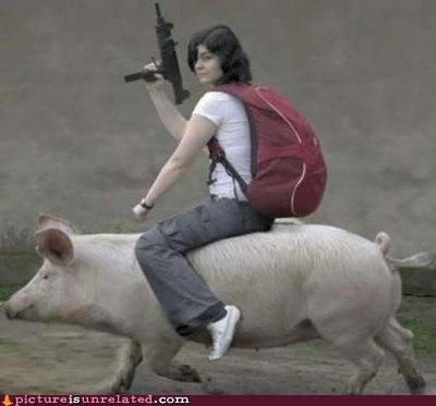 awesome,guns,pig,wtf