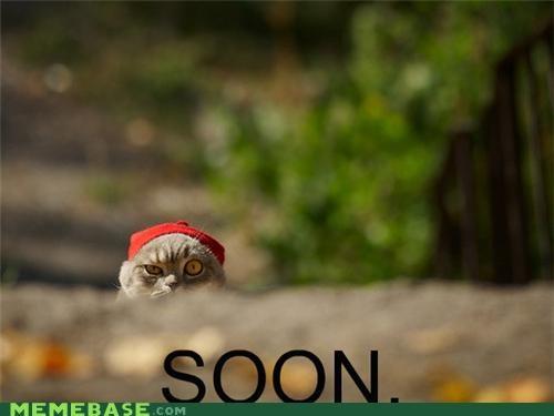 animemes cat focus gross hat SOON - 5312681216