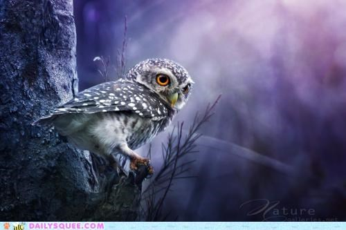beautiful comparison FAIL lolwut nocturnal Owl poem searching spotted spotted owl tenses william carlos williams wordplay