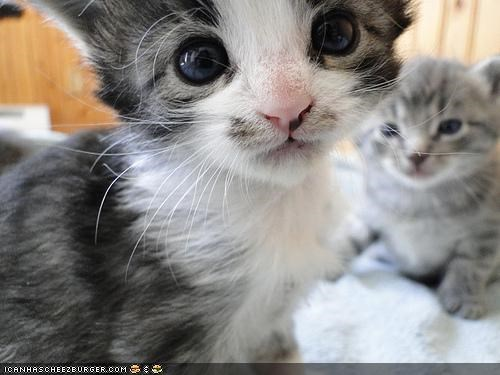 closeup creeping creepy cyoot kitteh of teh day Memes photobomb SOON two cats - 5313017344