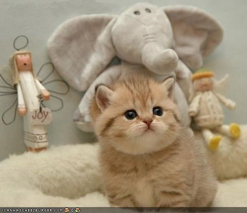 cyoot kitteh of teh day,elephants,fat,Fluffy,stuffed animals,stuffed toys,toys