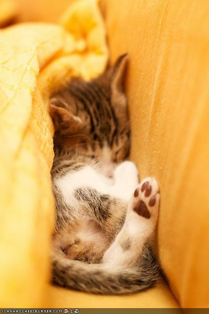asleep,bed,bedding,comfort is relative,crevice,cyoot kitteh of teh day,sleeping,yellow
