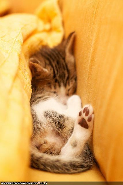 asleep bed comfort is relative cyoot kitteh of teh day sleeping yellow - 5313024256