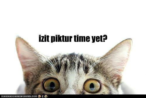 izit piktur time yet?