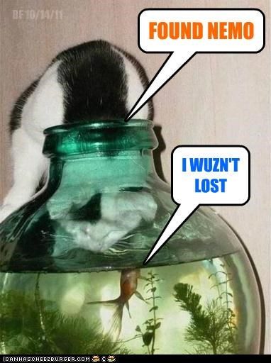 cat,finding nemo,fish,found,lost,pun