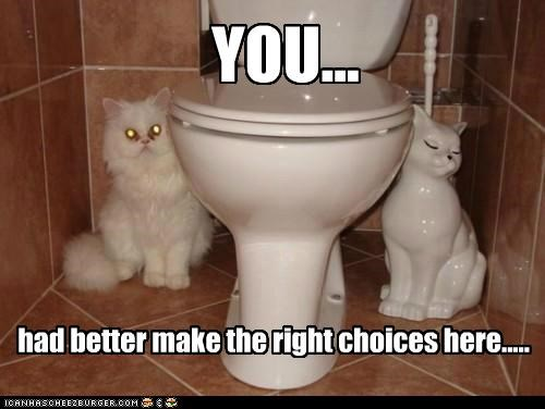 bathroom,caption,cat,Cats,choices,make,right,right choice,statue,suggestion,toilet scrubber,toilets,white