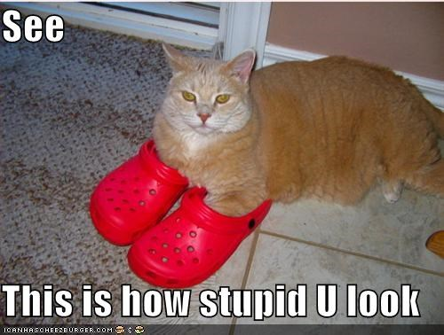 lolcats orange red shoes stupid - 531327232