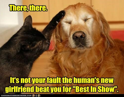 "still, next time YOU should hump the judge's leg There, there. It's not your fault the human's new girlfriend beat you for ""Best In Show""."