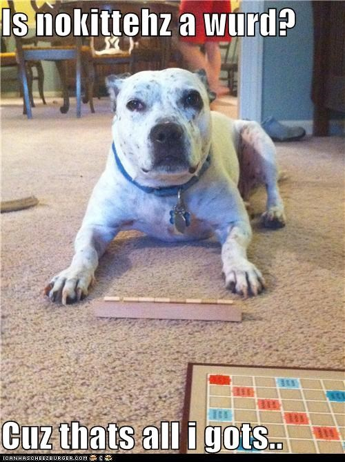 board game game on nokittehz pit bull pitbull scrabble spelling - 5314673152
