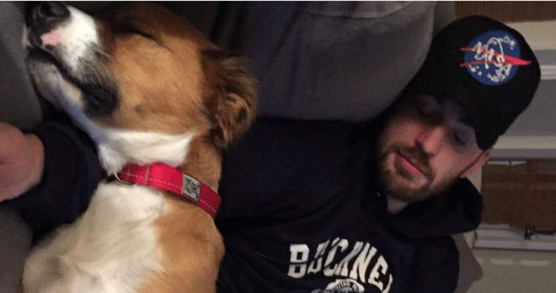 dogs cute chris evans funny - 5315077