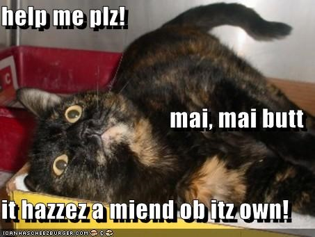 help me plz! mai, mai butt it hazzez a miend ob itz own!