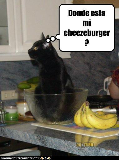 Cheezburger Image 5315511040