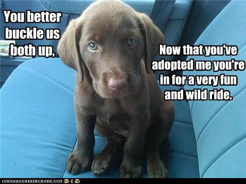 You better buckle us both up, Now that you've adopted me you're in for a very fun and wild ride.