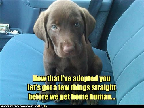 Now that I've adopted you let's get a few things straight before we get home human...