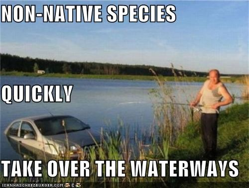 NON-NATIVE SPECIES QUICKLY TAKE OVER THE WATERWAYS
