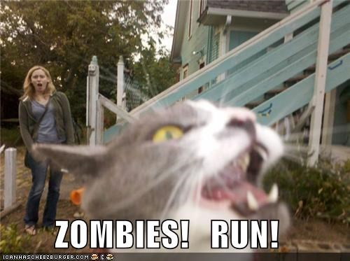 cat halloween I Can Has Cheezburger run zombie apocalypse zombie - 5316346368