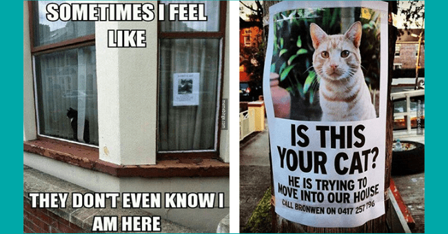 funny cat memes that perhaps are intended to make you laugh a little