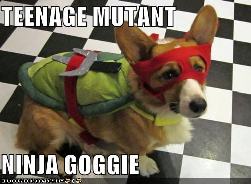 adorbz,corgi,costume,halloween,howl-o-ween,teenage mutant ninja turtles,turtle