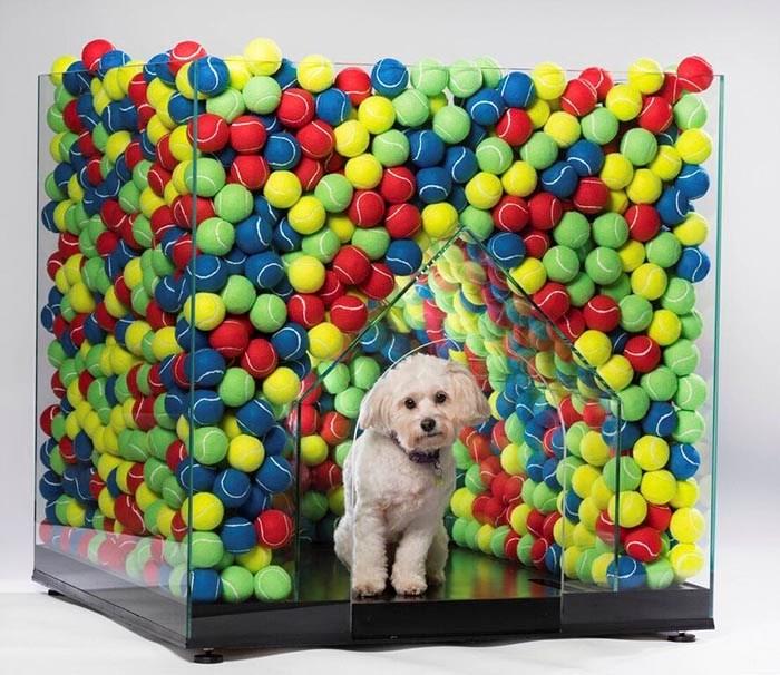 architecture dog house auction exhibition - 5316869