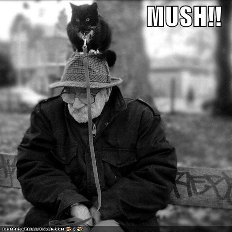 bw black and white hats hoomans humans leash lolcats old - 531707648