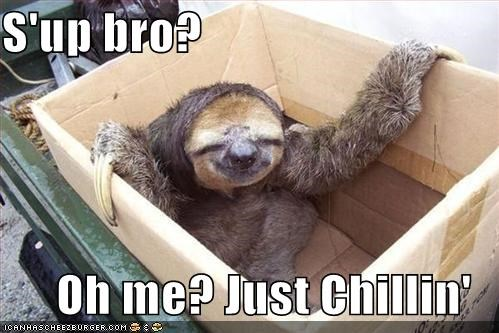 animals,box,chillin,sloth,sup bro