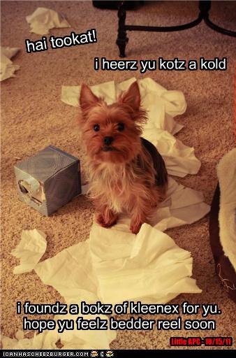 hai tookat! i heerz yu kotz a kold i foundz a bokz of kleenex for yu. hope yu feelz bedder reel soon Little APC - 10/15/11