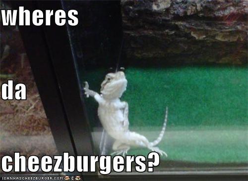 Cheezburger Image 5317223936