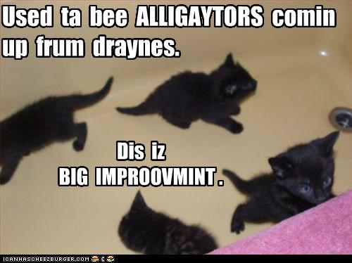 alligators,bathtub,caption,captioned,cat,Cats,drain,improvement,kitten,used to