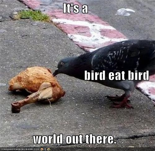 bird eat bird,cannibalism,eat,eating,food,pigeon