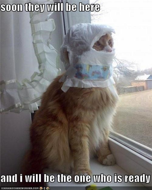 Battle cat diaper diaper on head diaper on your head I Can Has Cheezburger ready for battle