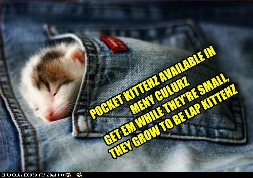 POCKET KITTEHZ