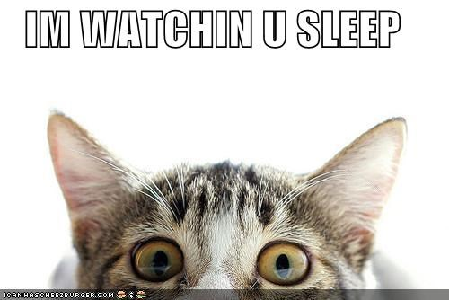 caption captioned cat creepy eyes peeking sleep Staring watching you - 5318252544