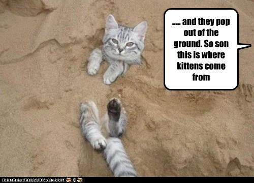 buried caption captioned cat explanation ground kitten location origina out pop sand where - 5318690816