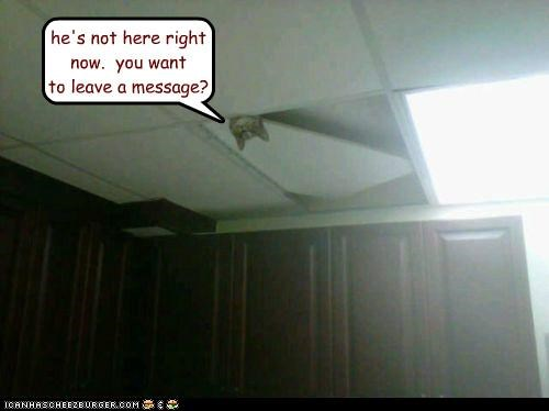 caption,captioned,cat,ceiling,ceiling cat,here,leave,message,not,now,offer,peeking,question,right