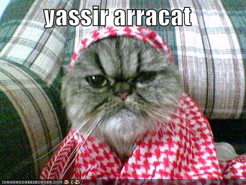 Cats clothes costume lolcats politics - 531882240