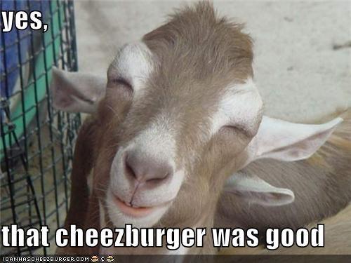 Cheezburger Image 5318978304