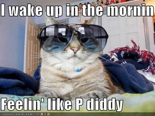 aviators,cat,feelin-like-p-diddy,I Can Has Cheezburger,ive-got-a-feeling,Music,P Diddy,Puff Daddy,rapper,rappers,sunglasses