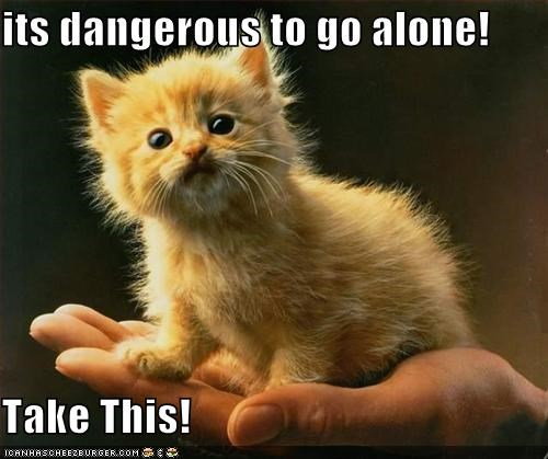 best of the week cat Hall of Fame I Can Has Cheezburger its dangerous to go alone kitten take this - 5319475456