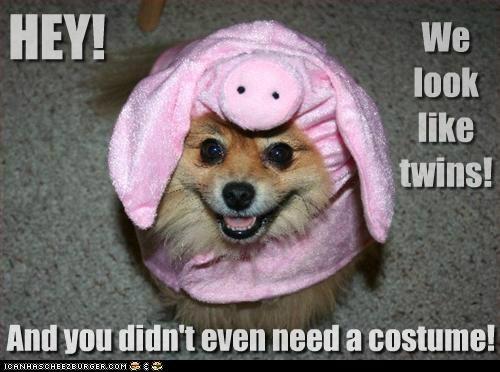 costume fat haha i has a hotdog pig pomeranian tease teasing twins - 5319556864