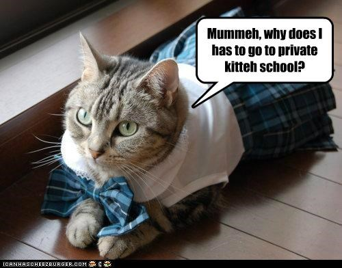 caption,captioned,cat,do not want,dressed up,forced,go,have to,mom,private,question,school,uniform,why